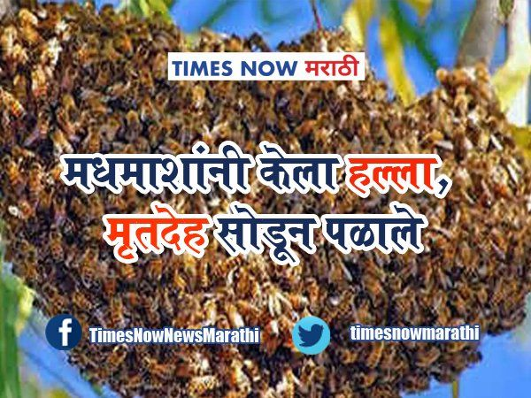 Honey bees attack on humans in cremation in gujarat viral news in marathi tvirl 88
