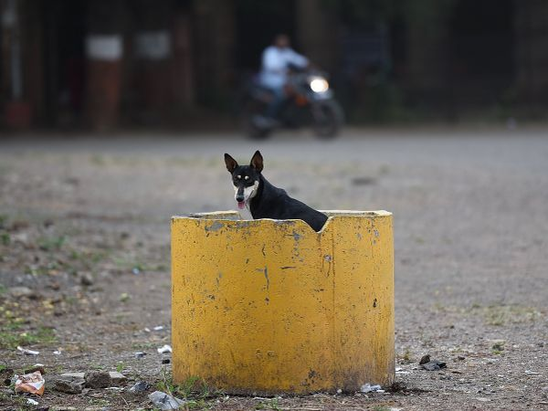 The accused often fed the dog, said police (Representative Image)