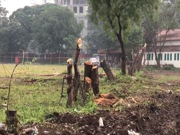 pune sp college trees cut pm narendra modi rally vidhansabha election 2019